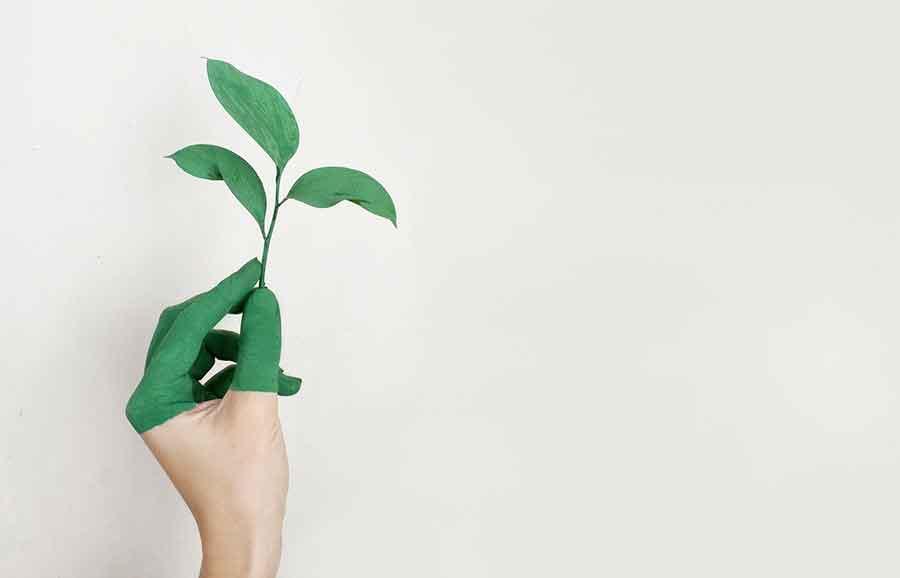 Une main peinte en vert tenant une plante